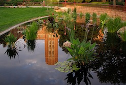The Mary Reed Building reflected in the Humanity Gardens pond
