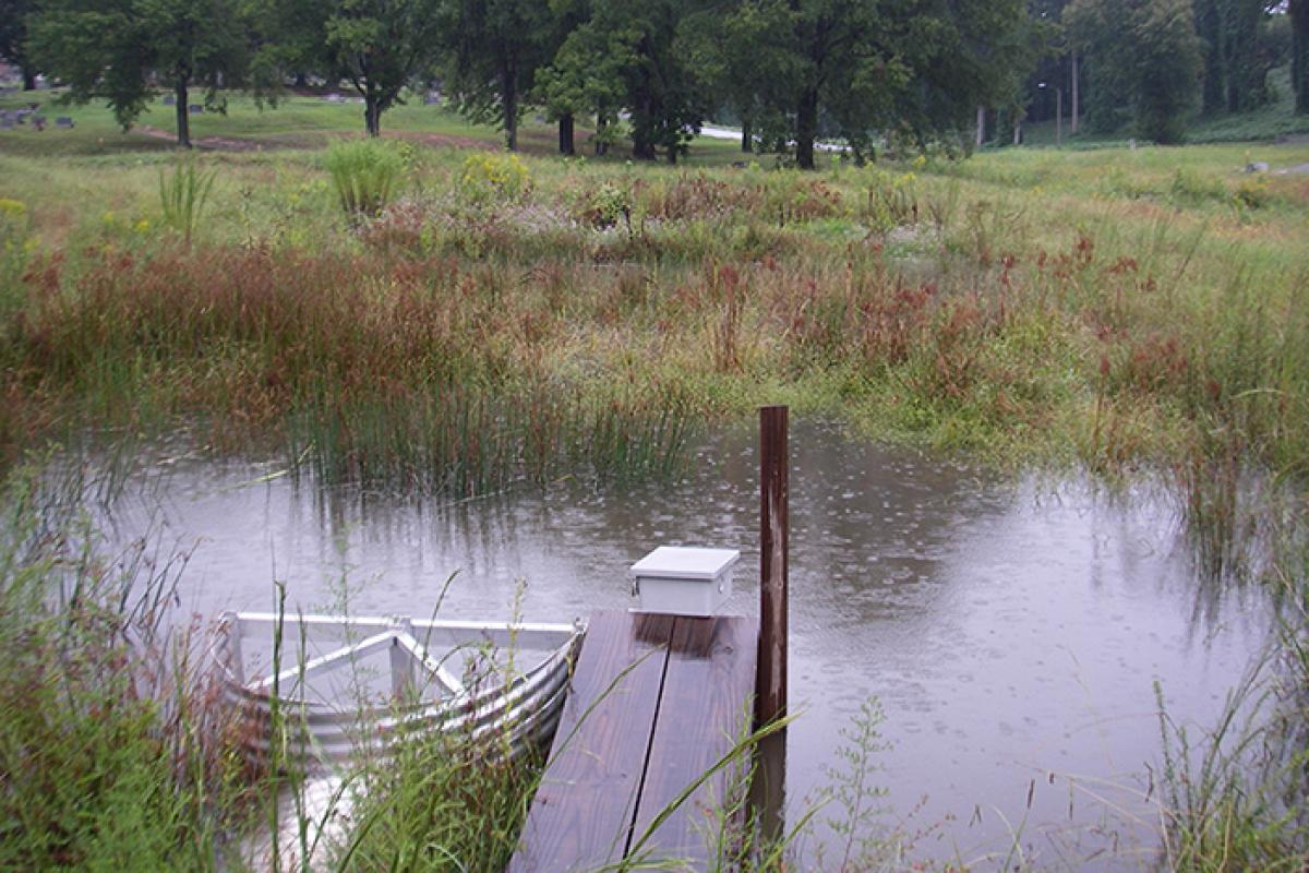 Flooded wetland