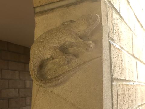 """olin-lizard """"typeof ="""" foaf: Image """"/></div><p> <span> <span> En todo el campus, hay varias demostraciones de creatividad menos conocidas y casi ocultas. Un ejemplo es el lagarto de piedra caliza ubicado en la escalera trasera de F.W. Olin Hall. Viene de una tradición medieval de incorporar una representación de un ratón de iglesia en la arquitectura de la iglesia. Esta tradición se actualizó en Olin para representar un camaleón, un reptil comúnmente utilizado en la investigación científica. </span> </span></p></p><div alt="""